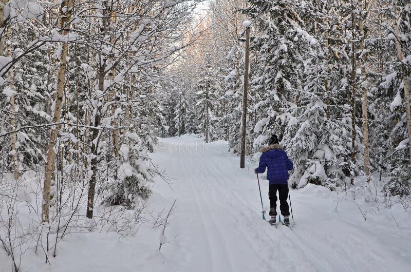 να κάνει σκι φύσης στοκ φωτογραφία