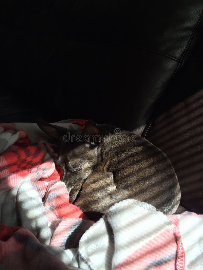 Να κοιμηθεί στον ήλιο στοκ φωτογραφία με δικαίωμα ελεύθερης χρήσης