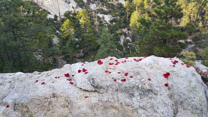 Να κοιτάξει πέρα από έναν απότομο βράχο στοκ εικόνες
