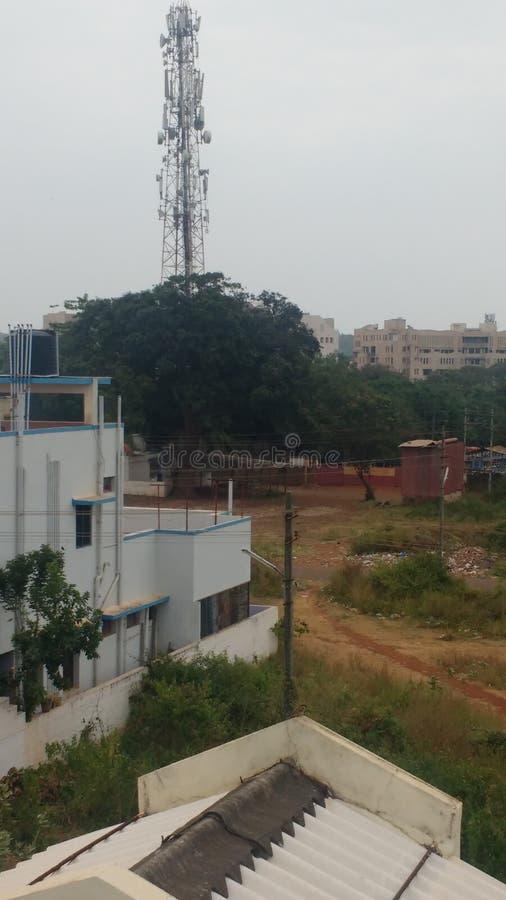 Να μειωθεί του σπουργιτιού στην Ινδία λόγω του δικτύου στοκ φωτογραφία με δικαίωμα ελεύθερης χρήσης