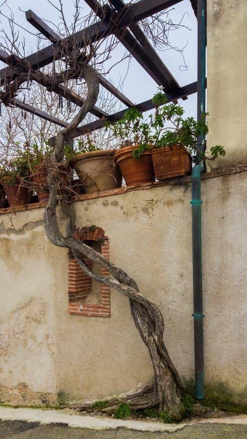 Να συμπλέξει έναν κορμό δέντρων κοντά στις διοχετεύσεις Δοχεία ο λουλουδιών αργίλου στοκ εικόνα