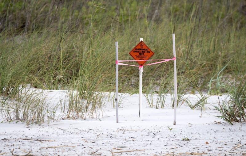 Να τοποθετηθεί χελωνών θάλασσας ηλιθίων περιοχή, επικεφαλής νησί Hilton, νότια Καρολίνα στοκ φωτογραφία με δικαίωμα ελεύθερης χρήσης