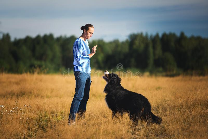 Νεαρός άνδρας που περπατά με το σκυλί βουνών Bernese στο θερινό τομέα στοκ φωτογραφίες