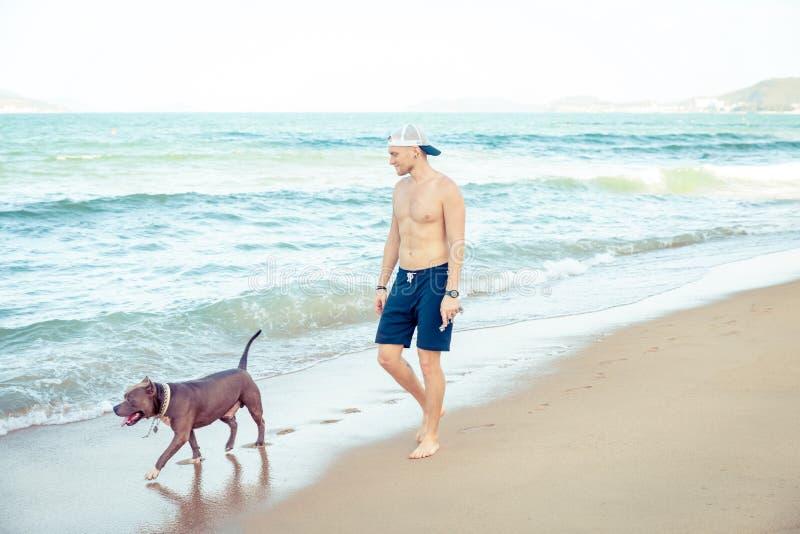 Νεαρός άνδρας με το αμερικανικό τεριέ πίτμπουλ σκυλιών που περπατά στην τροπική παραλία στοκ εικόνες