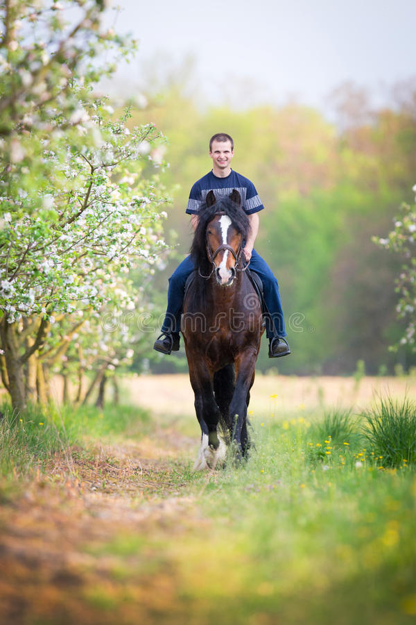 Νεαρός άνδρας που οδηγά ένα άλογο γύρω από τον οπωρώνα μήλων στοκ φωτογραφία με δικαίωμα ελεύθερης χρήσης