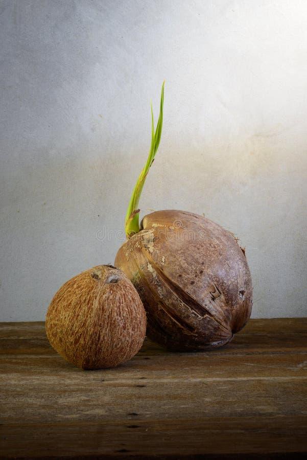 Νεαρός βλαστός του δέντρου καρύδων και της καρύδας που ξεφλουδίζονται στοκ φωτογραφία με δικαίωμα ελεύθερης χρήσης