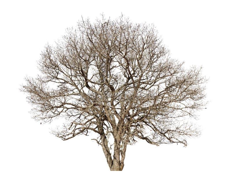Νεκρά δέντρα. Νεκρά δέντρα σε ένα άσπρο υπόβαθρο στοκ εικόνες