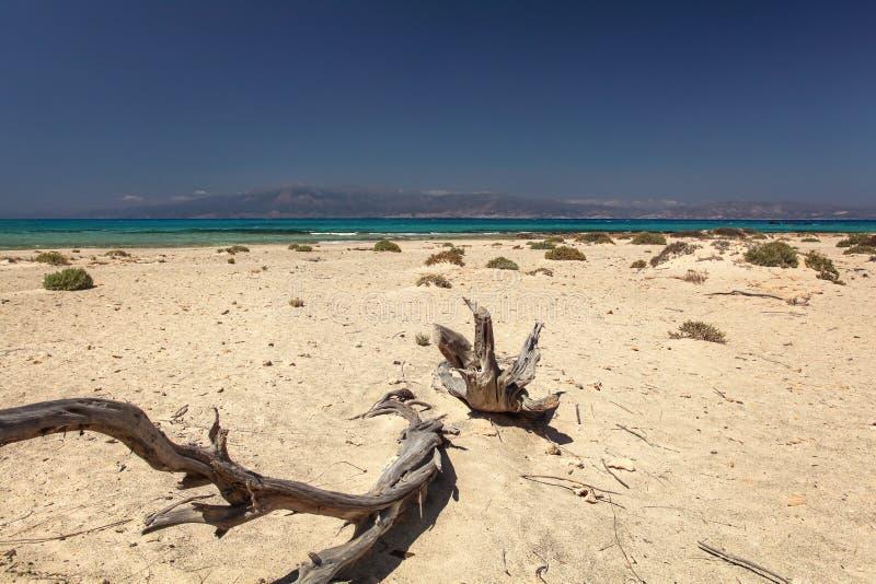 Νεκρά δέντρα ιουνιπέρων στην παραλία νησιών της Chrissi, η οποία μοιάζει με το dese στοκ εικόνα με δικαίωμα ελεύθερης χρήσης