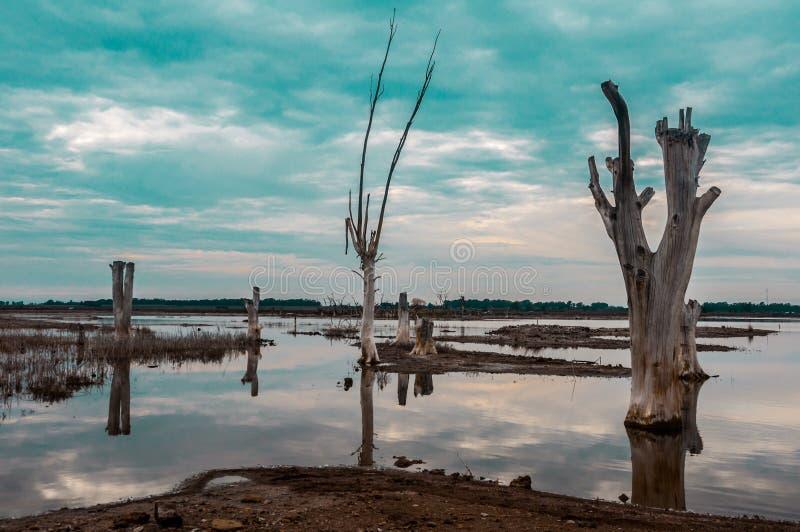 Νεκρά δέντρα μέσα σε μια λίμνη στοκ φωτογραφία