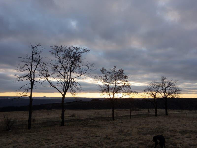 Νεκρά δέντρα στο ηλιοβασίλεμα στο χειμώνα στοκ εικόνες