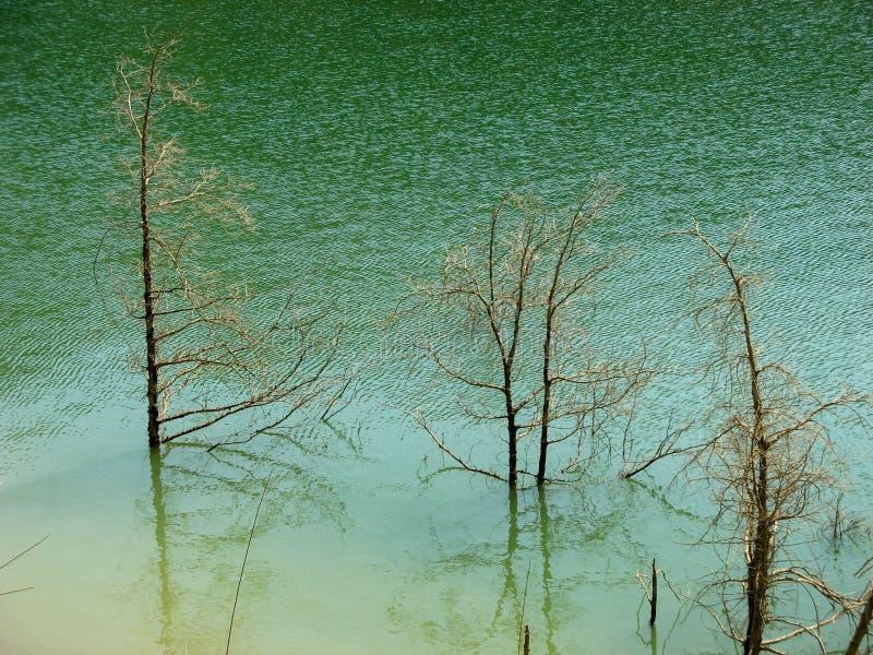 Νεκρά ξηρά δέντρα στη λίμνη Ξηροί κλάδοι δέντρων πέρα από το νερό επιφάνειας με το πράσινο υπόβαθρο νερού στοκ φωτογραφία με δικαίωμα ελεύθερης χρήσης