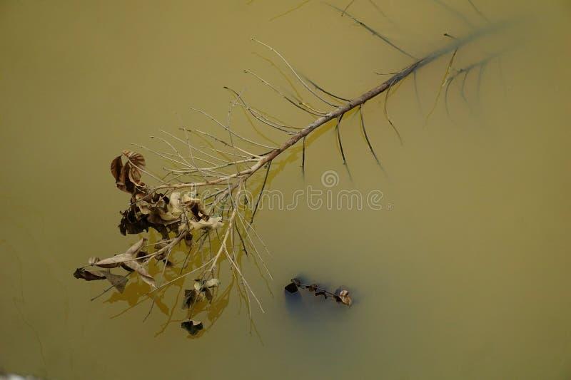 Νεκρά φύλλα λόγω του χρόνου πάρτε όλα από μας στοκ φωτογραφίες με δικαίωμα ελεύθερης χρήσης