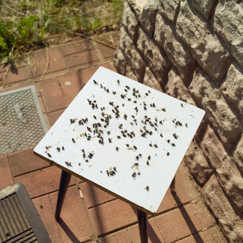 Νεκρές μύγες στην καρέκλα στοκ εικόνες