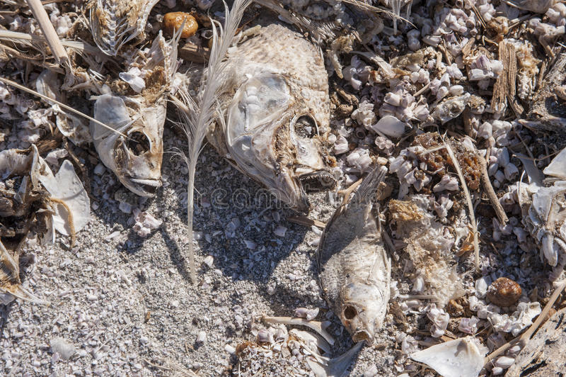 Νεκρές ψάρια και κασέτα στοκ εικόνα