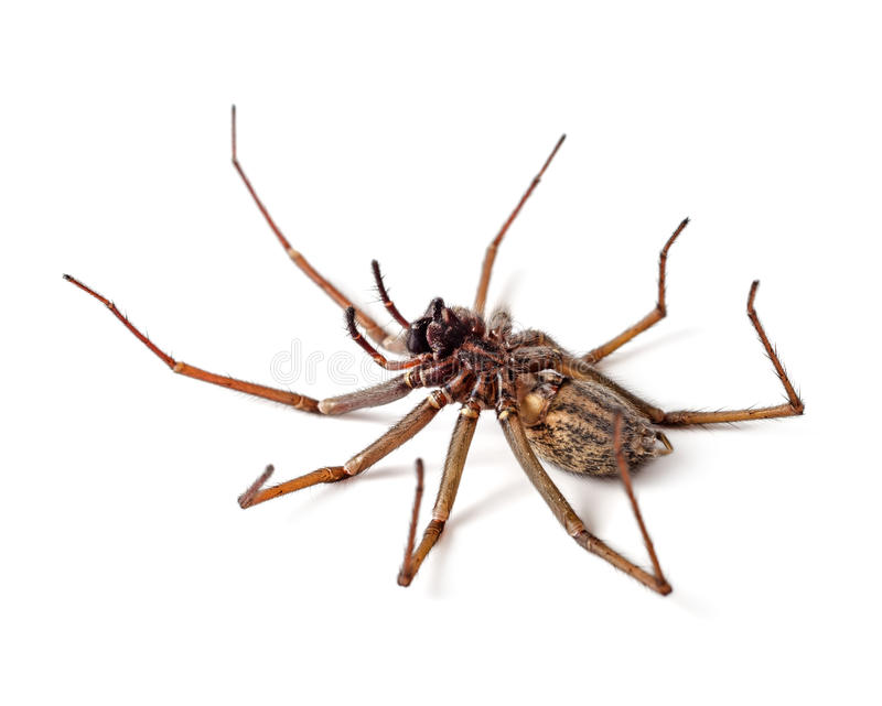 Νεκρή αράχνη στοκ φωτογραφίες με δικαίωμα ελεύθερης χρήσης