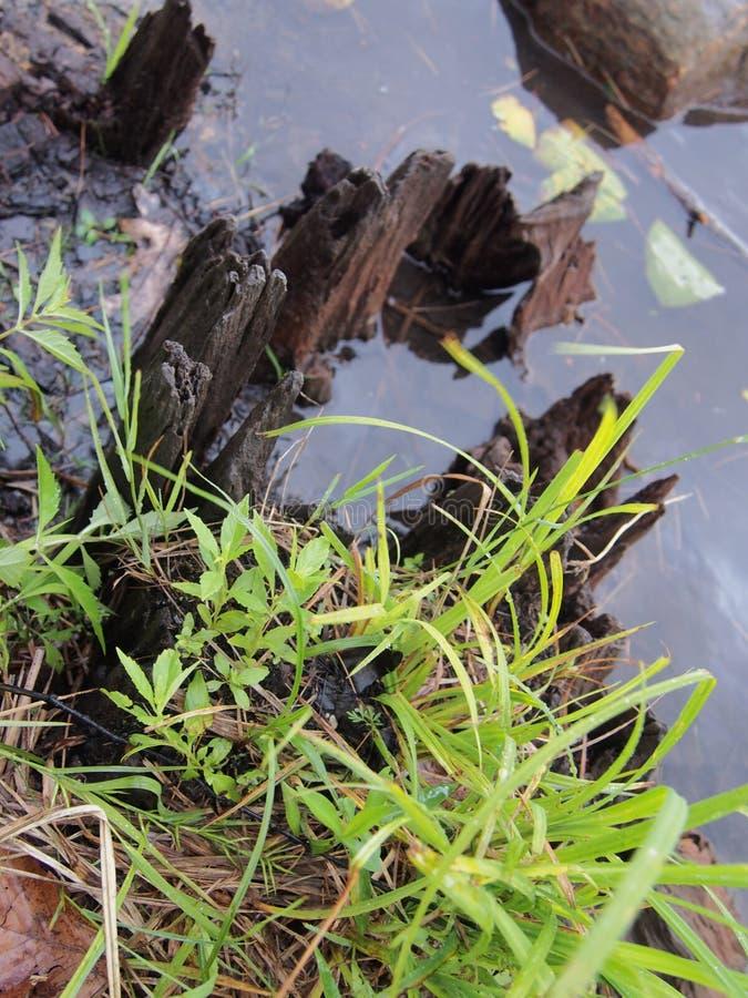 Νεκρή ξύλινη και πράσινη χλόη στοκ εικόνα με δικαίωμα ελεύθερης χρήσης