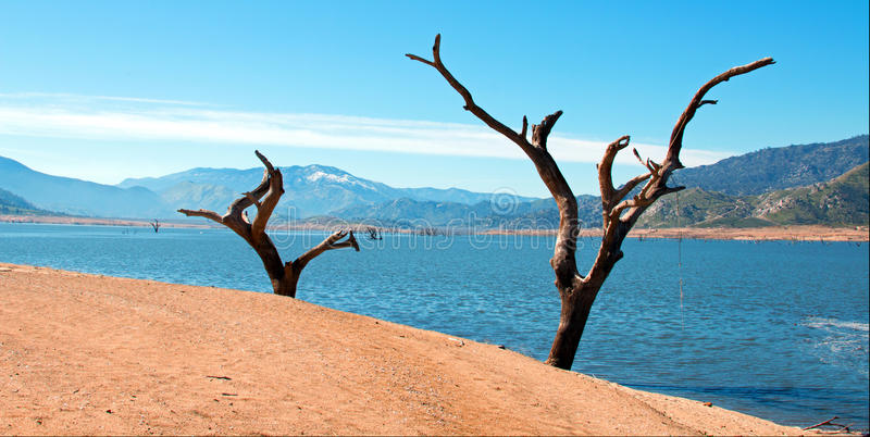 Νεκροί δέντρα και κορμοί κατά μήκος των όχθεων του Kern ποταμού όπου εισάγει το πληγε'ν από την ξηρασία ασβέστιο της Isabella Καλ στοκ φωτογραφία με δικαίωμα ελεύθερης χρήσης