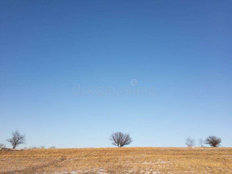 Νεκροί δέντρα και μπλε ουρανός στοκ φωτογραφίες