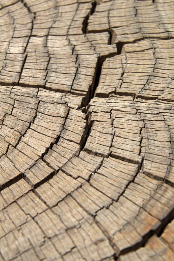 Νεκρός κορμός δέντρων πεύκων στοκ εικόνα