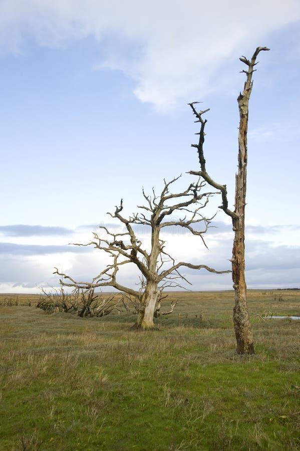 Νεκρός κόλπος Porlock δέντρων στοκ εικόνα