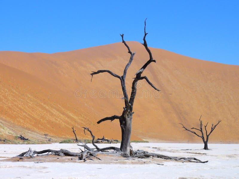 Νεκρό δέντρο στην αλατισμένη λεκάνη στοκ εικόνα