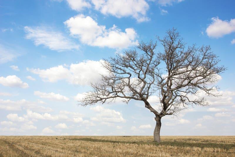 Νεκρό δέντρο στον τομέα στο καλοκαίρι με το μπλε ουρανό και τα σύννεφα στοκ φωτογραφία με δικαίωμα ελεύθερης χρήσης