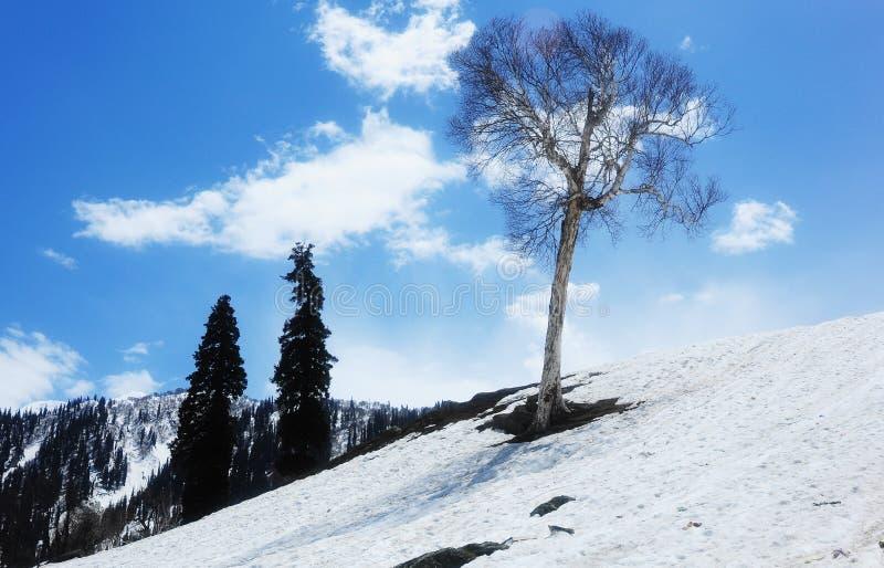 Νεκρό δέντρο στο χιονισμένο λόφο στοκ εικόνες με δικαίωμα ελεύθερης χρήσης