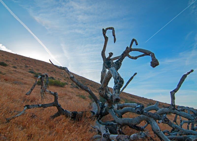 Νεκρό δέντρο Cloudscape του Joshua στο ηλιοβασίλεμα στο ασβέστιο Palmdale Καλιφόρνια στοκ εικόνες