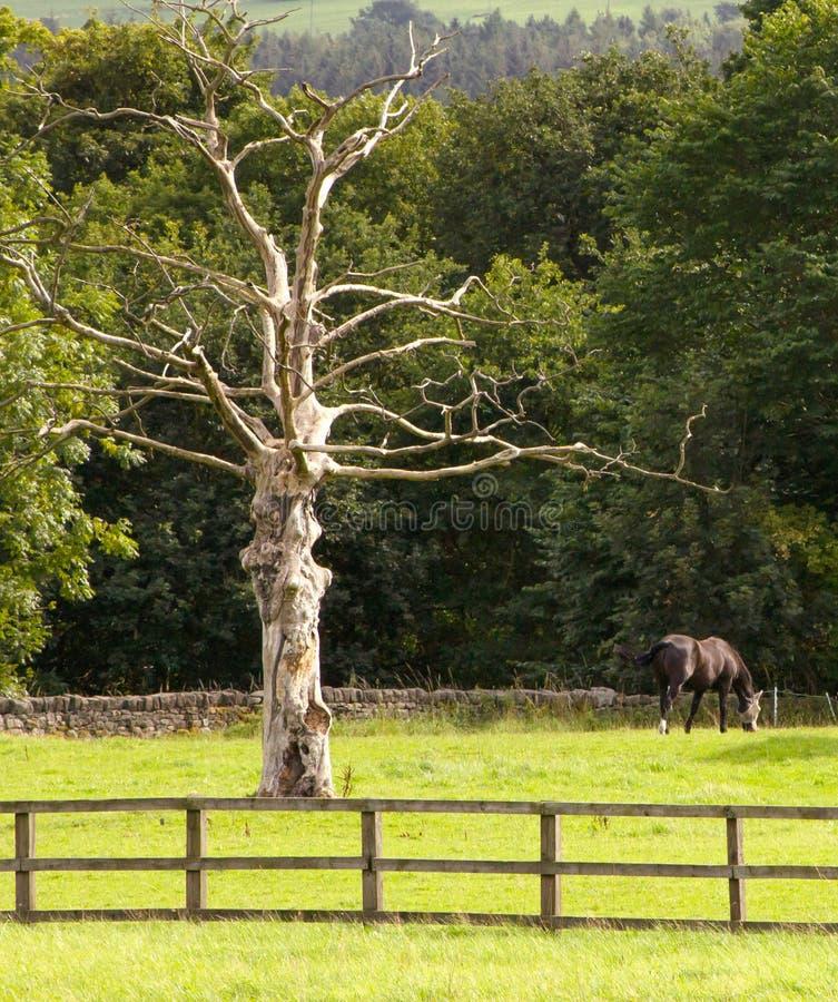 Νεκρό γλυπτό δέντρων στοκ φωτογραφίες