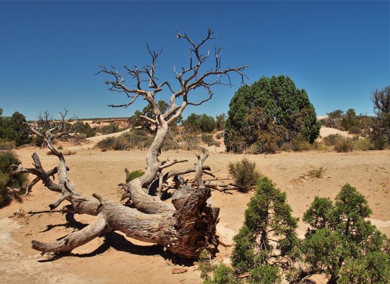 νεκρό δάσος στοκ εικόνα