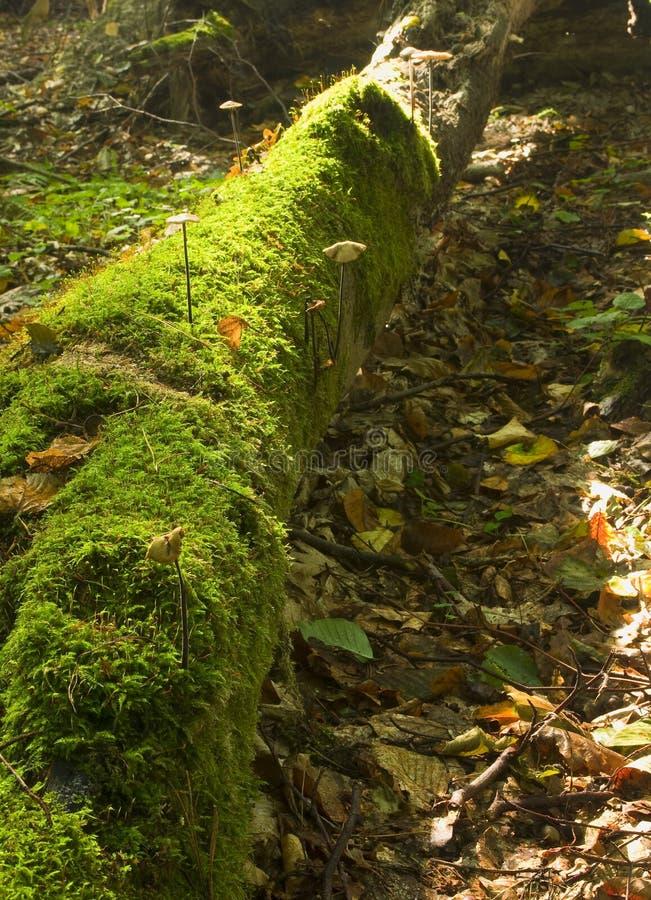 νεκρό δάσος στοκ φωτογραφία με δικαίωμα ελεύθερης χρήσης