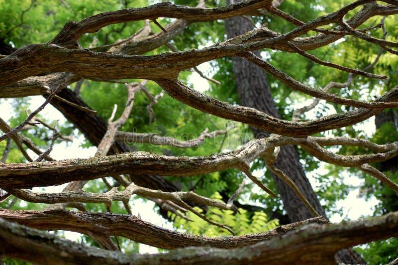 νεκρό δέντρο κλάδων στοκ φωτογραφίες