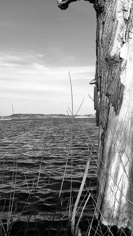 Νεκρό δέντρο λιμνών του Ουισκόνσιν στοκ εικόνα με δικαίωμα ελεύθερης χρήσης