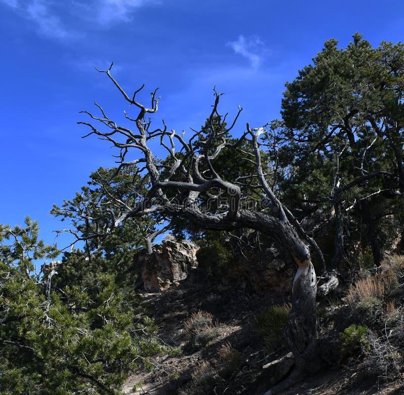 Νεκρό δέντρο σε έναν τομέα των δέντρων διαβίωσης στοκ εικόνα