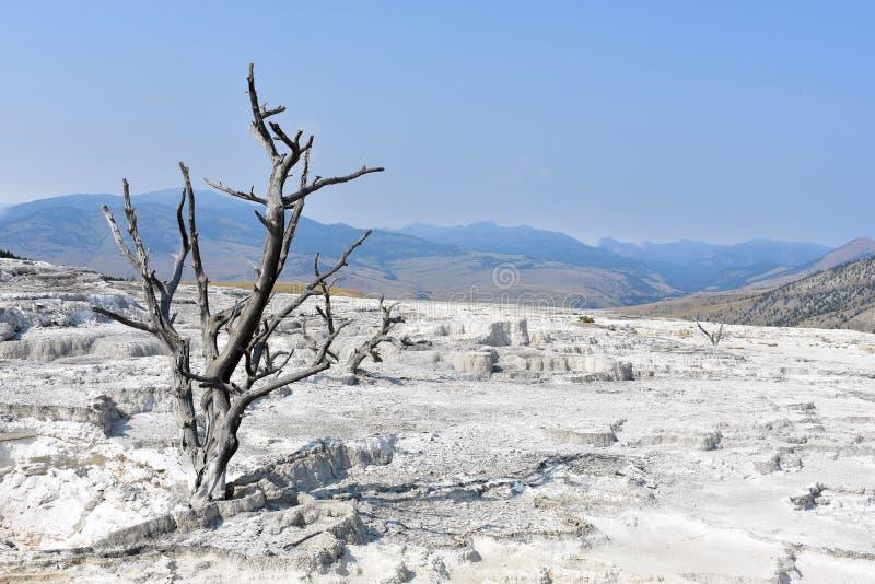 Νεκρό δέντρο σε ένα άγονο τοπίο - εθνικό πάρκο Yellowstone στοκ φωτογραφία με δικαίωμα ελεύθερης χρήσης