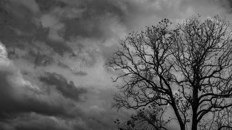 Νεκρό δέντρο σκιαγραφιών στο σκοτεινό δραματικό γκρίζο ουρανό και υπόβαθρο σύννεφων για τρομακτικό, το θάνατο, και την έννοια ειρ στοκ φωτογραφία