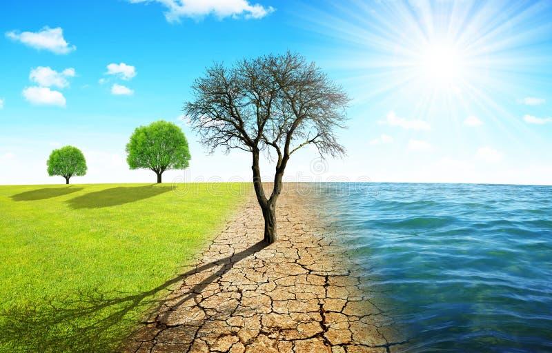 Νεκρό δέντρο στην ξηρά χώρα με το ραγισμένο χώμα και το λιβάδι με τη θάλασσα ελεύθερη απεικόνιση δικαιώματος