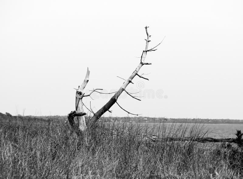Νεκρό δέντρο στο νερό στοκ εικόνες με δικαίωμα ελεύθερης χρήσης