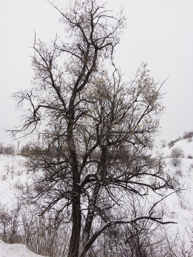 Νεκρό δέντρο στο χειμώνα στοκ εικόνα με δικαίωμα ελεύθερης χρήσης