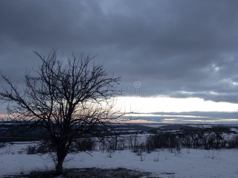 Νεκρό δέντρο το χειμώνα και το δραματικό ουρανό στοκ εικόνες