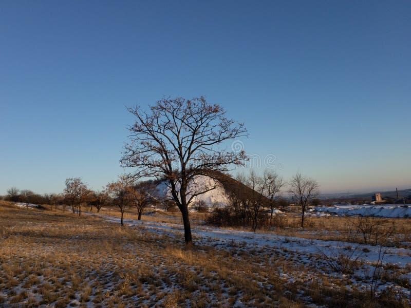 Νεκρό δέντρο το χειμώνα στο υπόβαθρο ουρανού στοκ εικόνα με δικαίωμα ελεύθερης χρήσης