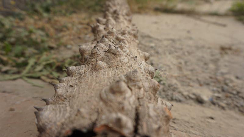 νεκρό δασικό δέντρο στοκ φωτογραφία με δικαίωμα ελεύθερης χρήσης