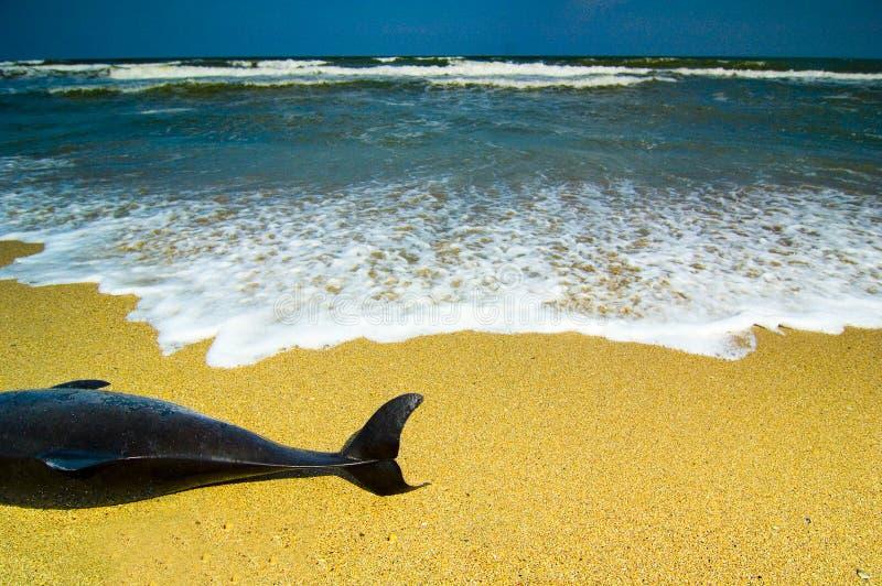 νεκρό δελφίνι στοκ φωτογραφία με δικαίωμα ελεύθερης χρήσης
