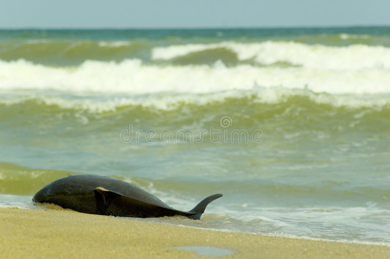 νεκρό δελφίνι στοκ φωτογραφίες με δικαίωμα ελεύθερης χρήσης