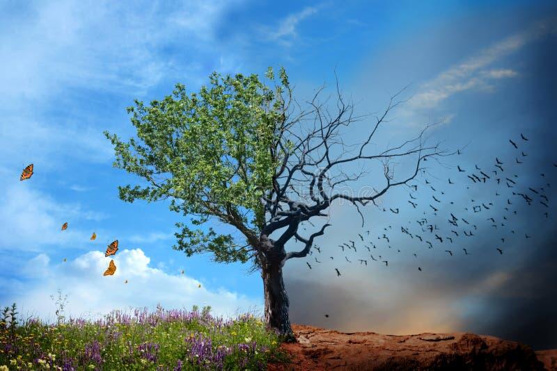 νεκρό ζωντανό δέντρο στοκ φωτογραφίες