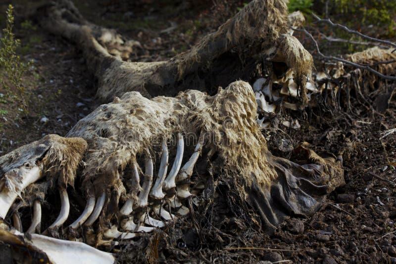 Νεκρό καγκουρό στοκ φωτογραφία με δικαίωμα ελεύθερης χρήσης