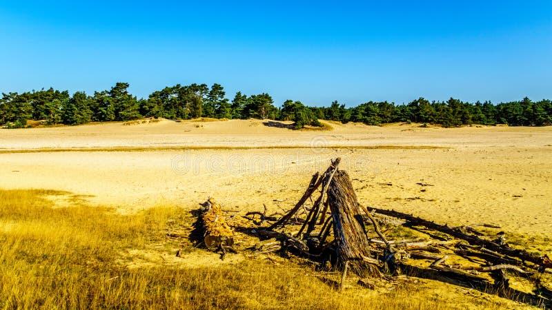 Νεκρό κολόβωμα δέντρων στη μίνι έρημο Beekhuizerzand στοκ εικόνες
