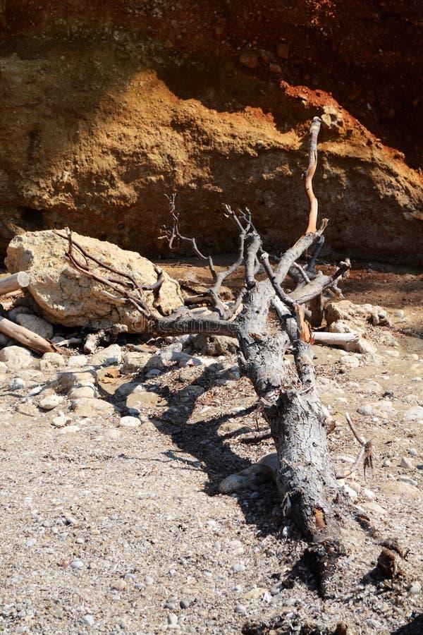Νεκρό ξύλο στοκ φωτογραφία με δικαίωμα ελεύθερης χρήσης