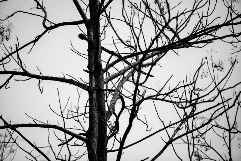 Νεκρό υπόβαθρο δέντρων με έξω το φύλλο στοκ εικόνα με δικαίωμα ελεύθερης χρήσης