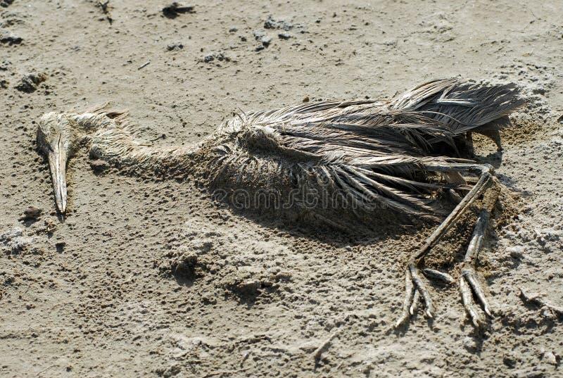 νεκρό φλαμίγκο στοκ εικόνα με δικαίωμα ελεύθερης χρήσης